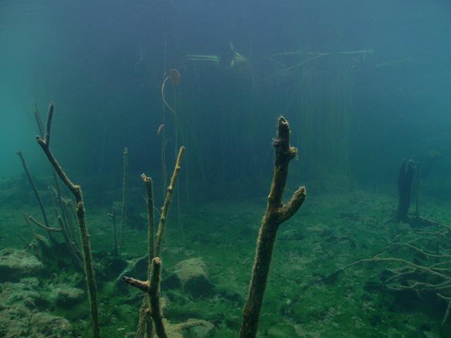 Flachwasserbereich